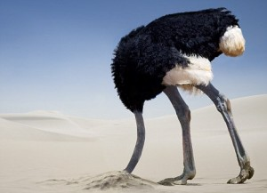 the-myth-of-the-ostrich